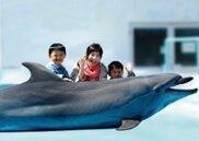 みさき公園 イルカと記念撮影&アシカえさやり体験