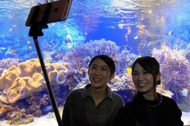 水族館ならではのSNS映えスポット誕生 GWフォトジェニック水槽