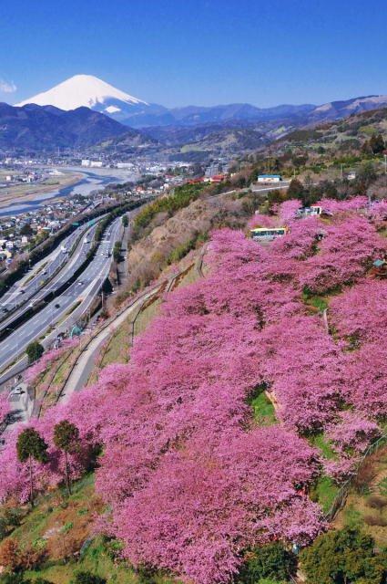 第20回 まつだ桜まつり