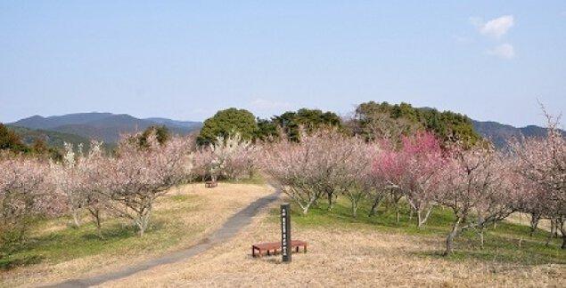 【花・見ごろ】八木山花木園の梅