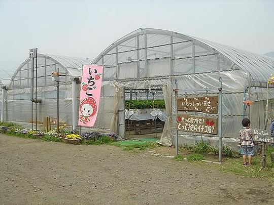やっと見つけた!とっておきのイチゴ畑? いちご狩り