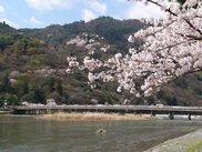 【桜・見ごろ】嵐山