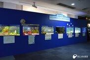 第7回 えのすい水槽コンテスト作品展