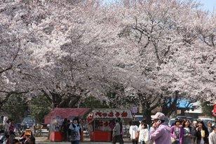 桜まつり(鴻巣会場)