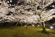 栗林公園 春のライトアップ