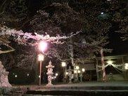 【桜・見ごろ】妙了寺