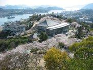 【桜・見ごろ】千光寺公園