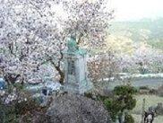 【桜・見ごろ】粟ヶ岳