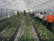 富田林市農業公園サバーファーム