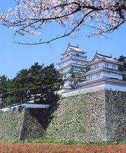【桜・見ごろ】島原城
