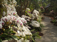 ビオスの丘うりずんの花祭り