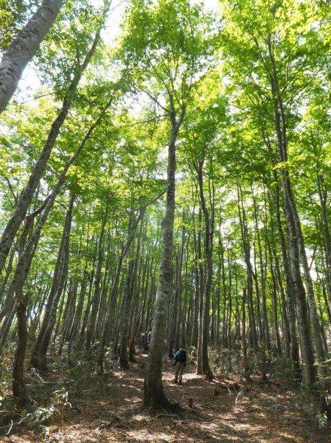 扇ノ山新緑登山