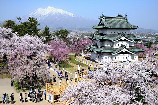 弘前公園のソメイヨシノの桜