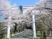 愛宕山(山頂)