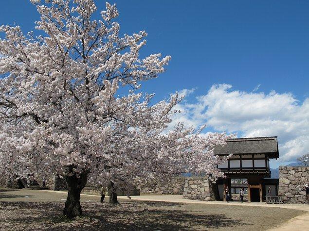 松代城跡の桜
