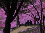2017たきのうえ「芝ざくらと渓谷のまちファンタスティック写真大賞」札幌展
