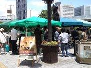 JR浜松駅北口広場犬猫ふれあい譲渡会