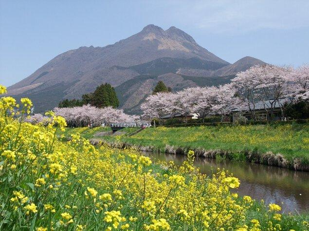 由布院・大分川沿いの桜並木
