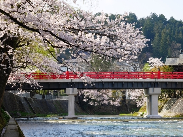 中橋周辺の桜