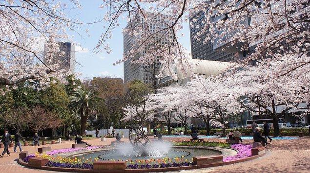 日比谷公園の桜 (東京都千代田区...