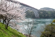 【桜・見ごろ】西海橋春のうず潮まつり