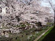 元住吉渋川沿い・中原平和公園