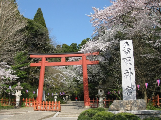 香取神宮の桜