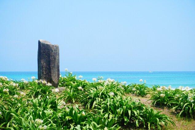 【花・見ごろ】二位ノ浜ハマユウ群落