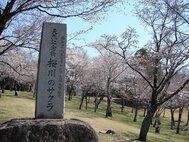 磯部桜川公園