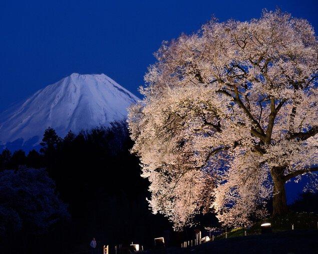 わに塚の桜の桜