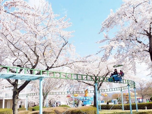 八戸公園の桜