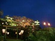 【桜・見ごろ】臼杵公園
