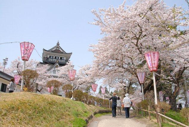 横手公園の桜