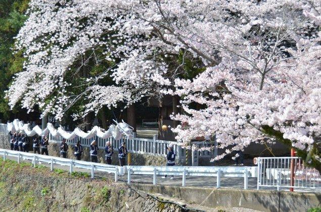 飯山白山森林公園の桜