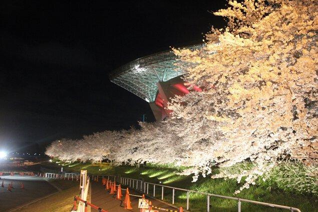 埼玉スタジアム2002公園の桜