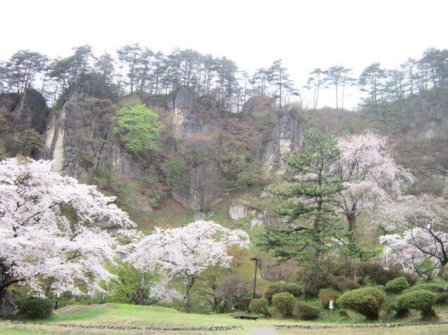 きみまち阪公園の桜