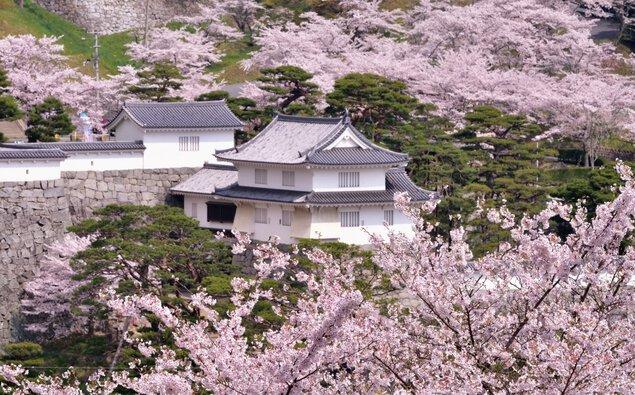 霞ヶ城公園の桜
