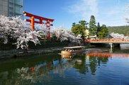 岡崎桜回廊ライトアップ&十石舟めぐり