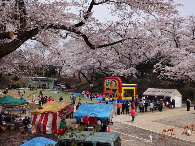 龍城公園(大田原市)の桜