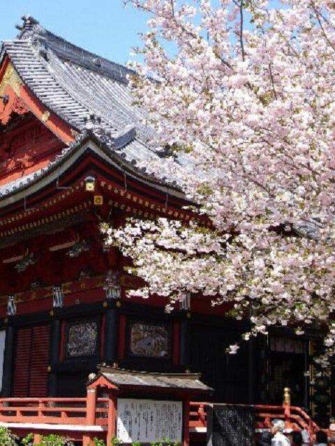 雨引観音の桜