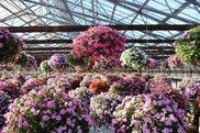 掛川花鳥園 天空の花畑