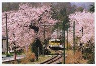 弥彦公園(早咲き)