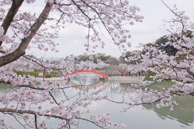垣生公園の桜