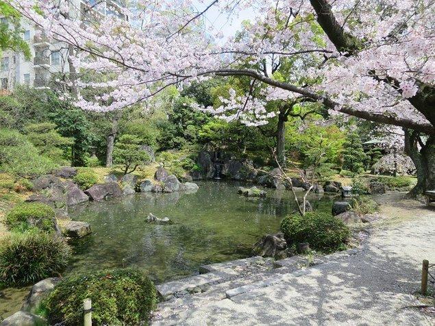 総本山 四天王寺の桜