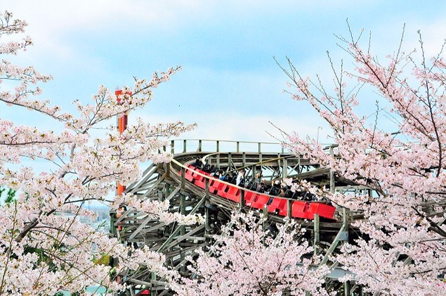ひらかたパークの桜