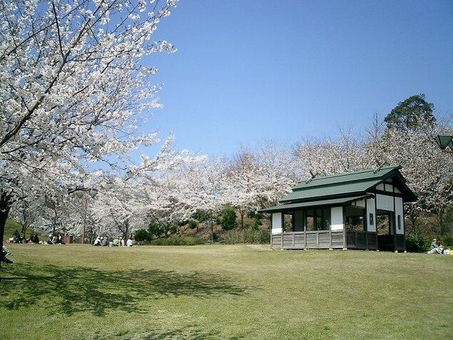 志乎・桜の里 古墳公園の桜
