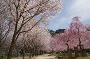 笠置キャンプ場(木津川畔)