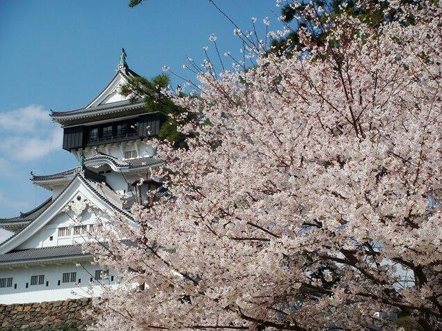 勝山公園(小倉城)の桜