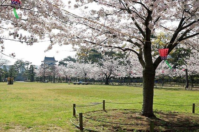 史跡高松城跡玉藻公園の桜
