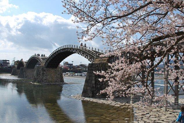 錦帯橋周辺の桜